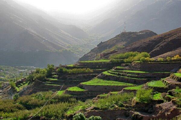 terraces of crops in high atlas