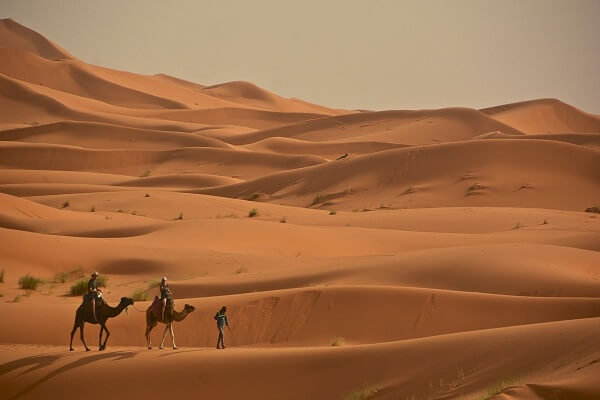 boy leading camels in the sahara desert