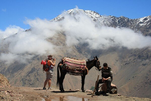 mule and tourist in mountain passe