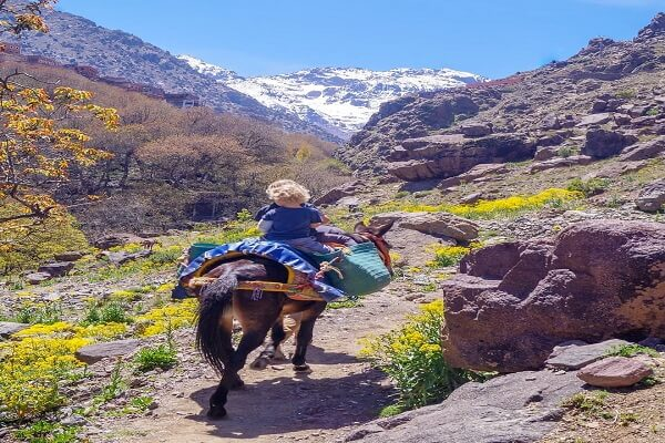 a bybe boy riding a mule in atlas mountains in morocco
