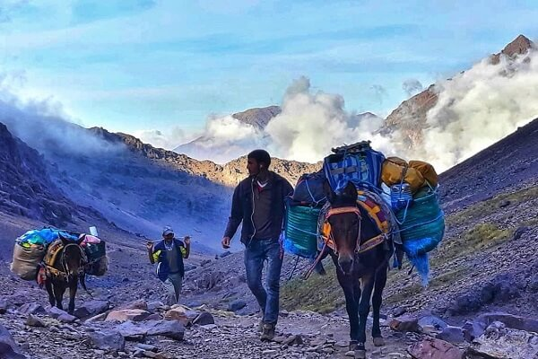 mule carring tourists luggage to toubkal