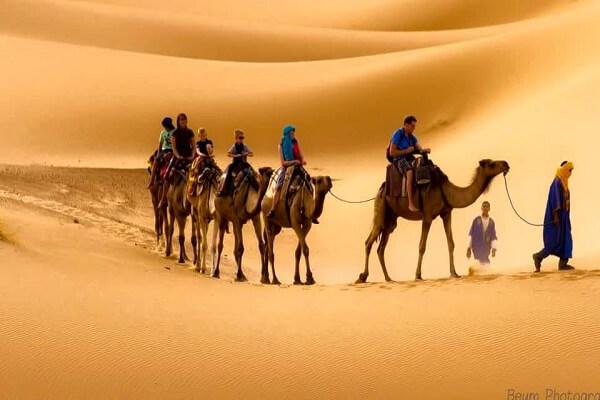 people riding camels in sahara desert