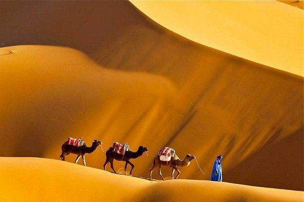 three camels walking on the sand dunes