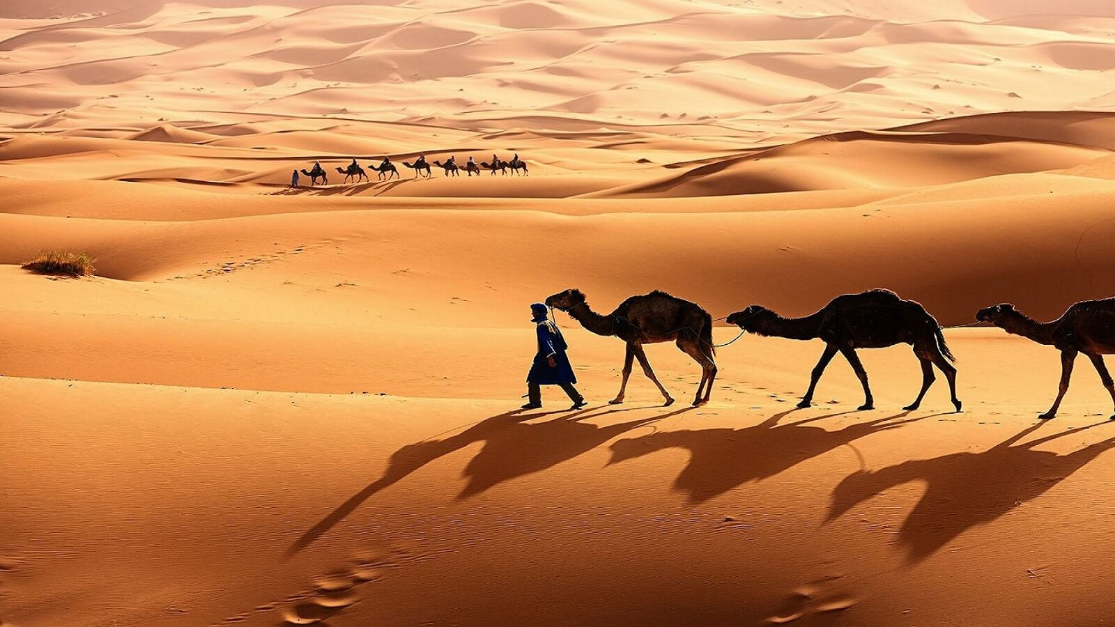 a man leading camels in the desert