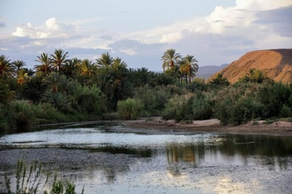 river and palm trees in daraa valley