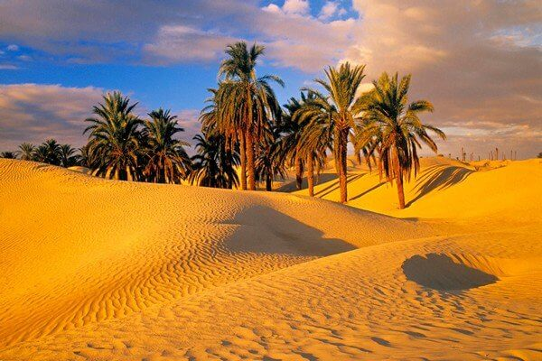 palm trees and sand dunes