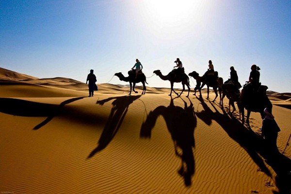 a man leading a group of camels in sahara desert