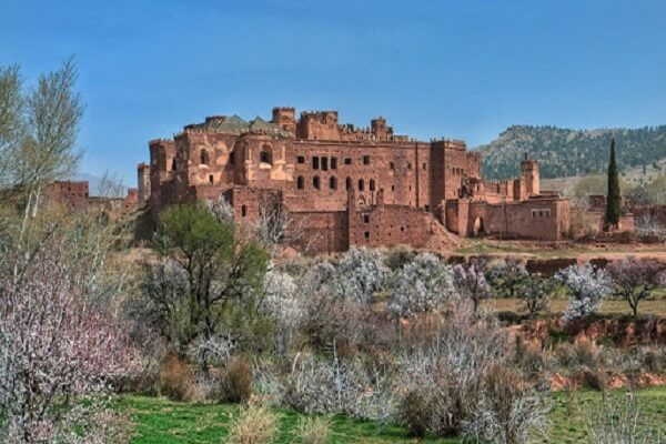 very old kasbah and cherry blossoms
