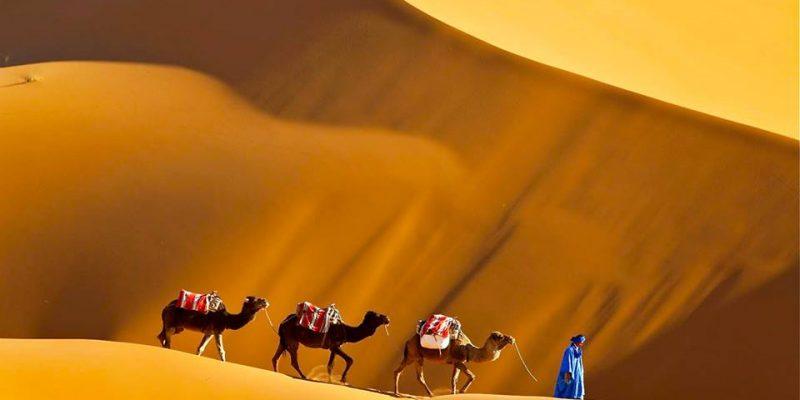 camel tours in sahara desert