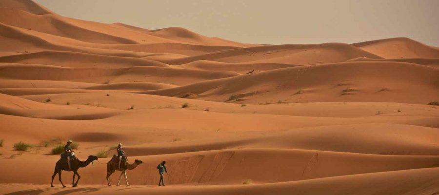 camel-ride-sahara-desert